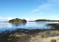 Découverte des coquillages - Arzon / Golfe du Morbihan 56-4