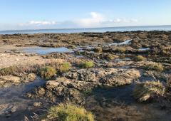 ATELIER ENFANT PÂTISSERIE - Arzon /Golfe du Morbihan 56-7