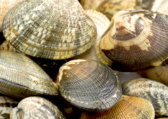 atelier cuisine: les fruits de mer à l'apéritif-10