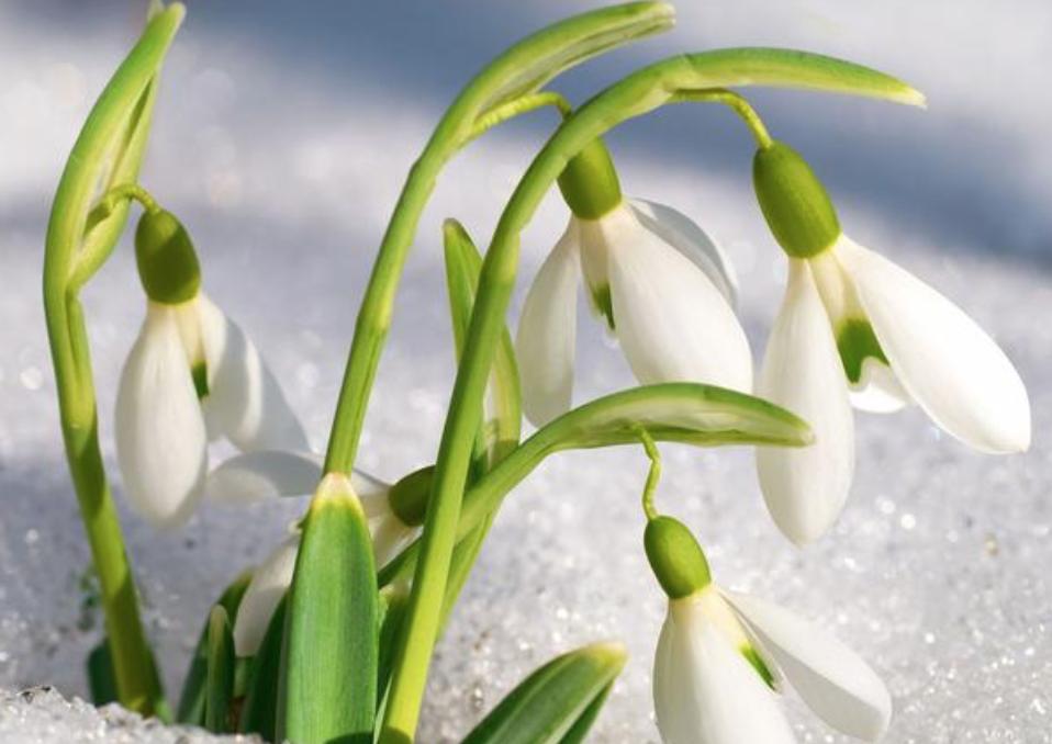 Atelier art floral : FLEURS D HIVERS 2021