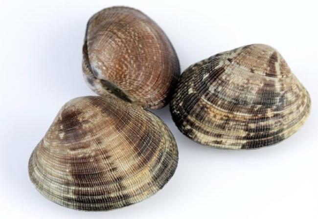 Découverte & pêche des coquillages - Arzon / Golfe du Morbihan 56