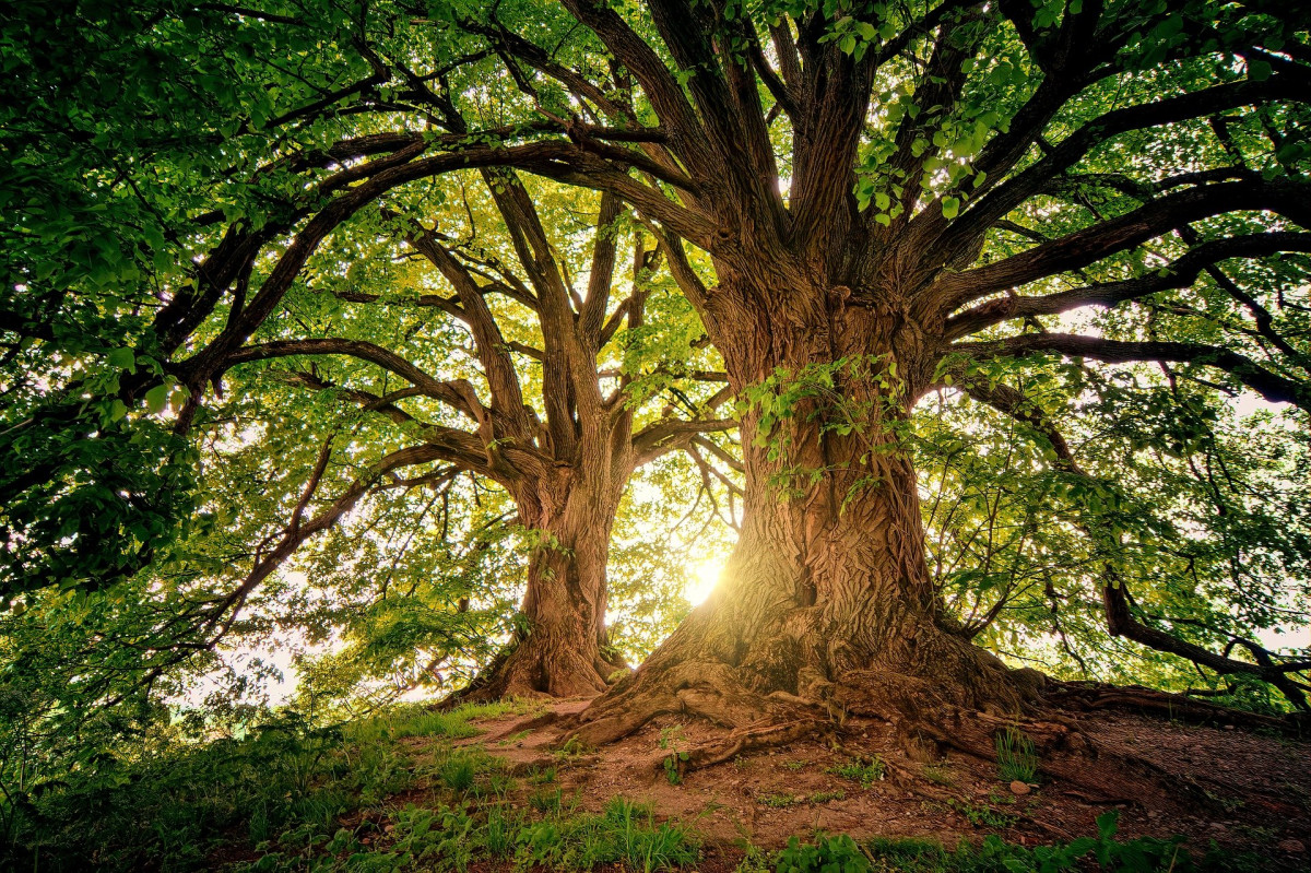 "SORTIE LUDIQUES ""Observons les arbres & leurs secrets"""
