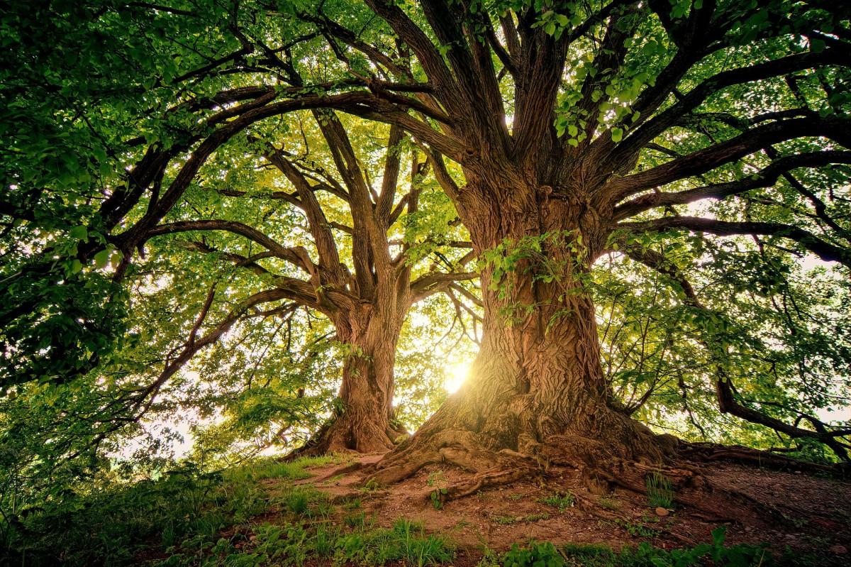 """SORTIE NATURE LUDIQUE """"Observons les arbres & leurs secrets"""""""
